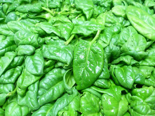 Salatspinat