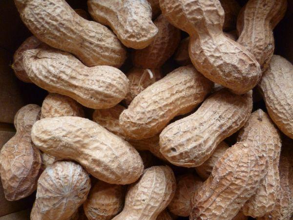 Erdnüsse, ungeschält
