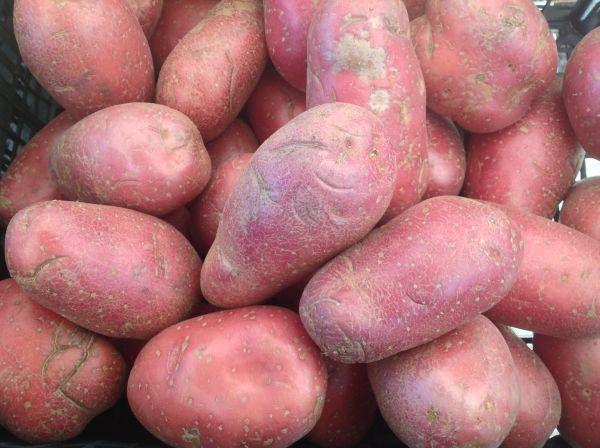 Kartoffel rotschalig