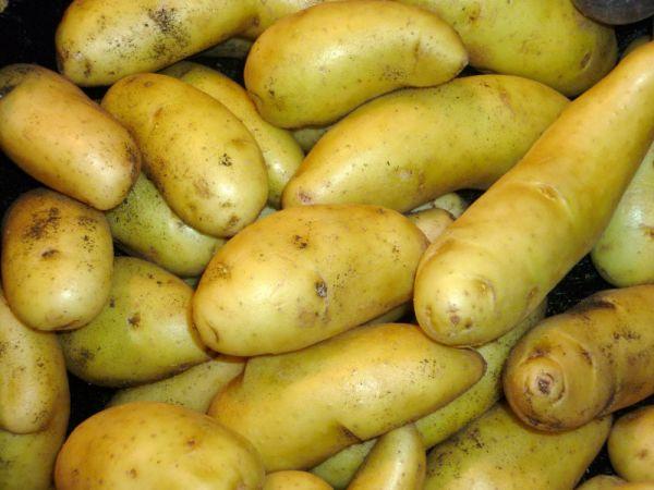 Kartoffel halb und halb
