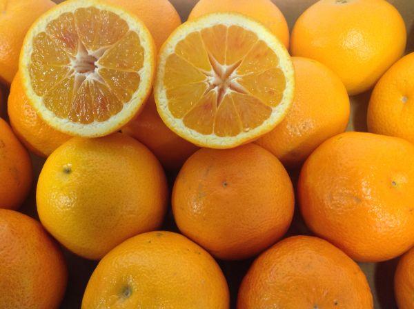 Halbblut-Orangen