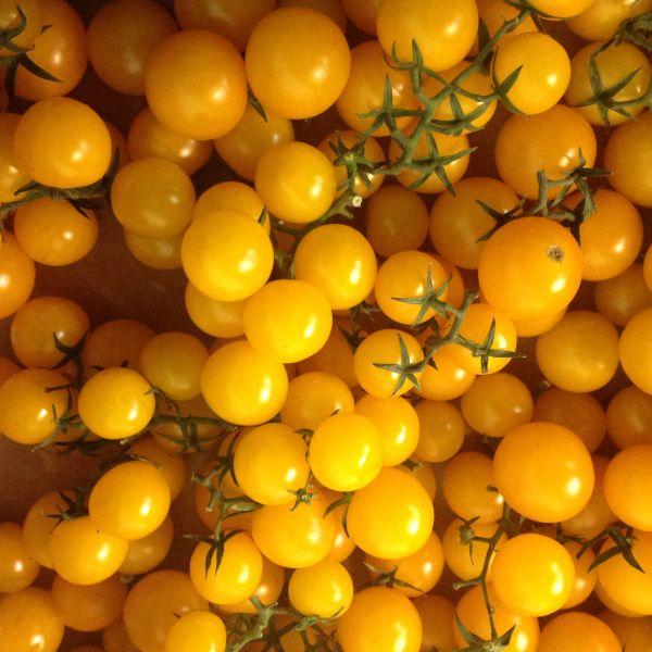 Kirsch-, Datteltomaten gelb