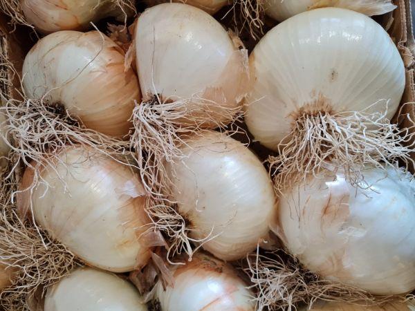 Zwiebel hellbraun süß - Giarratana