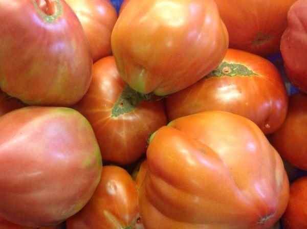Ochsenherz-Tomate - Cuore di bue