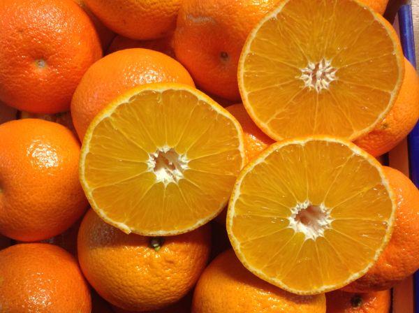 Halbblut-Clementinen