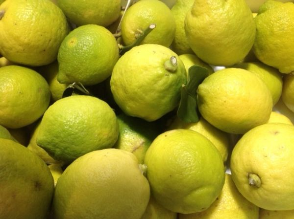 Zitronen aus Sizilien