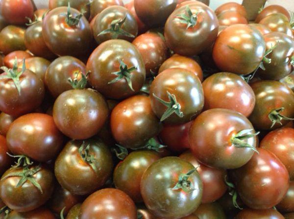 Sardische Runde (Tomate)