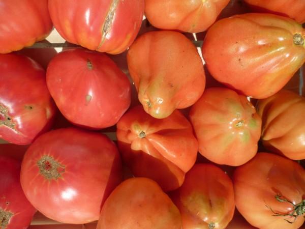 Tomaten gemischt - 5 kg + 1 Mozzarella