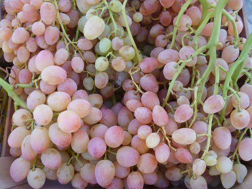 Trauben rosé kernlos