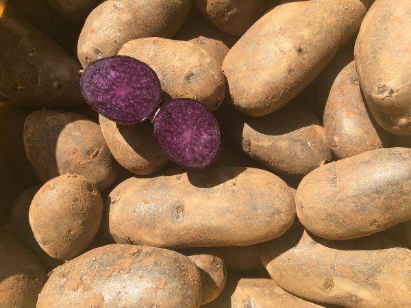 Kartoffel blaufleischig