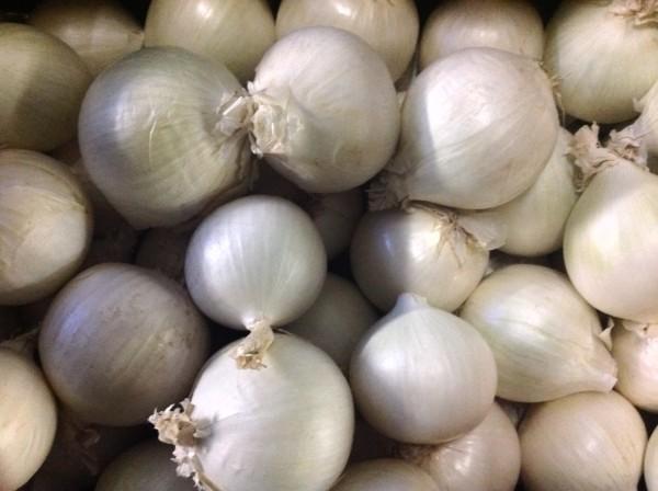 Zwiebel weiß getrocknet